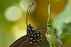 -butterfly-2-.jpg