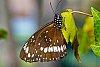 -butterfly-4-.jpg