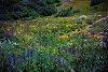 -spring-flowers.jpg