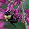 -big-bee.jpg