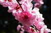 -spring-blossom-1.jpg