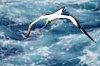 -pentaxforumbird.jpg