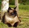-cat-2-resized.jpg