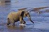 -sabie-elephant.jpg