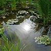 -pond_sm.jpg