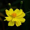 -flower-yellow.jpg