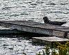 -dock-visitor-9710.jpg