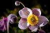 -autumn-flower.jpg