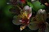 -orchid-1.jpg