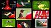 -hbird-collage-00.jpg