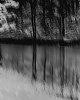 -pond.jpg