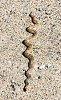 -gopher-snake-rz.jpg