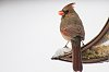 -11-27-2014thanksgivingbirds-209.jpg