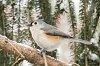 -jan-06-2015-snowbirds-004.jpg