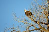 -eagle-jan14-2.jpg