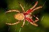 -garden-spider.jpg