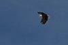 -eagle-flight.jpg