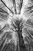 -tree2.jpg