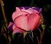 -wet-pink.jpg
