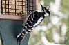 -feb-17-2015-snowbirds-001.jpg