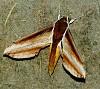 -moth-002.jpg