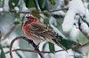 -march-5-2015-snowbirds-024.jpg