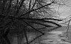 -trees-fallen-water-tpzbw-031415.jpg
