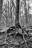 -tree-roots-tpzbw-031415.jpg