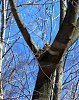 -horned-owl-4-4-2015-9-00-41-am.jpg