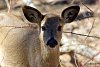 -deer-head-shot-4-2-2015-7-41-58-am.jpg