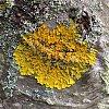 -fungus-tree.jpg