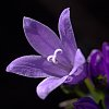 -purple-flower-garden.jpg