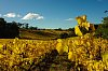 -vines-summertown-1.jpg