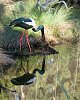 -black-necked-crane-pf.jpg