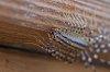 -house-centipede-macro-051615.jpg