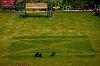 -patriotic-lawn-saltire.jpg