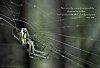 -spider-tpzbw-poem-060515.jpg