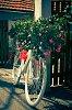 -power-flower.jpg