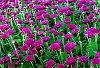 -summer-flowers-21st.jpg