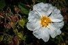 -soft-white-linen.jpg