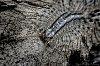 -house-centipede-tpzbw-070115.jpg