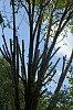 -tree-trim-010.jpg