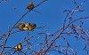 -birds.jpg