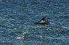 -dolphin1.jpg