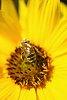-bee-not-bee.jpg