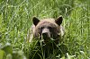 -bear-small-pic.jpg