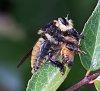 -2015-8-8-bee-killer-iii.jpg