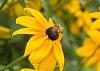 -bees-3920.jpg
