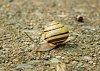 -snail-5151.jpg