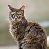 -cat-645d0477.jpg